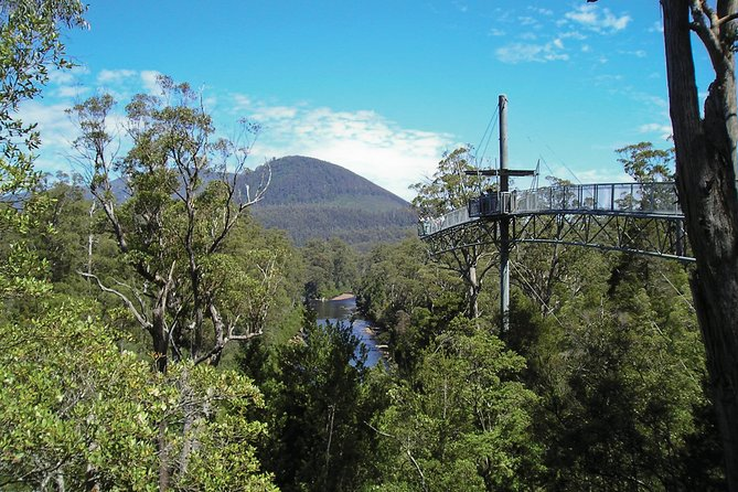 Cruise Ship Special from Hobart: Mt Wellington and Tahune AirWalk with free WiFi