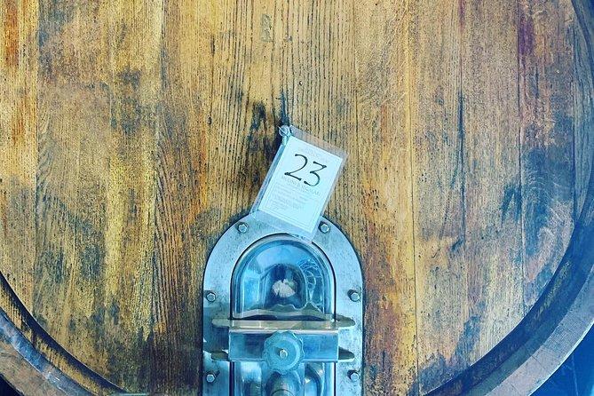 Bolgheri Wine Tour & Extra Virgin Olive Oil Tasting Experience