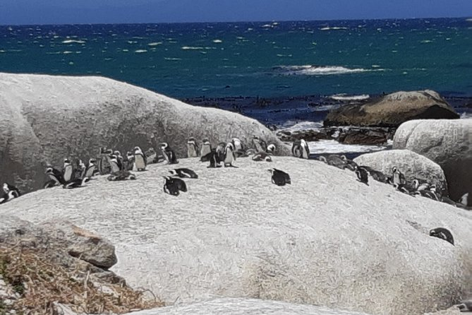 Cape Peninsula Day Tour