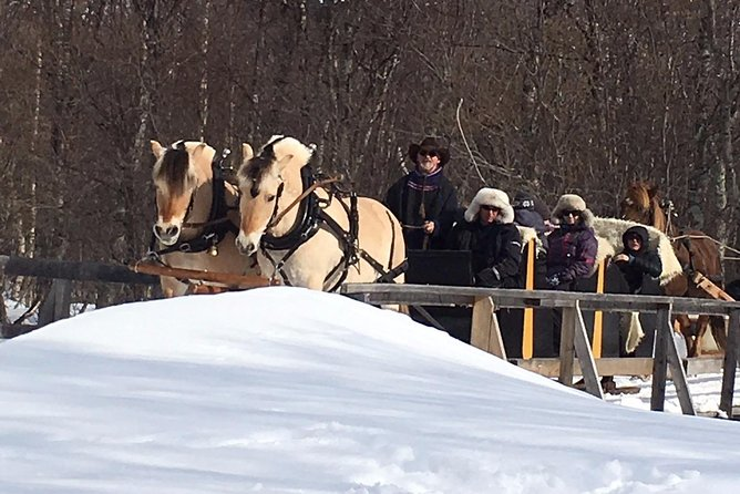 Sleigh Ride w/ Tapas Meal - Experience Arctic Farm Life photo 8