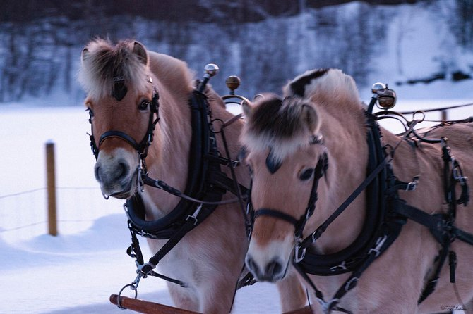 Sleigh Ride w/ Tapas Meal - Experience Arctic Farm Life photo 11