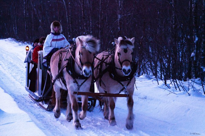 Sleigh Ride w/ Tapas Meal - Experience Arctic Farm Life photo 7