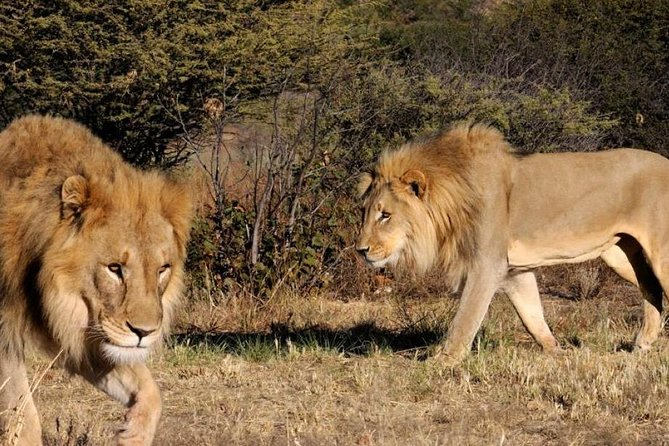 Hluhluwe Imfolozi Game Reserve 1 Day Tour From Durban