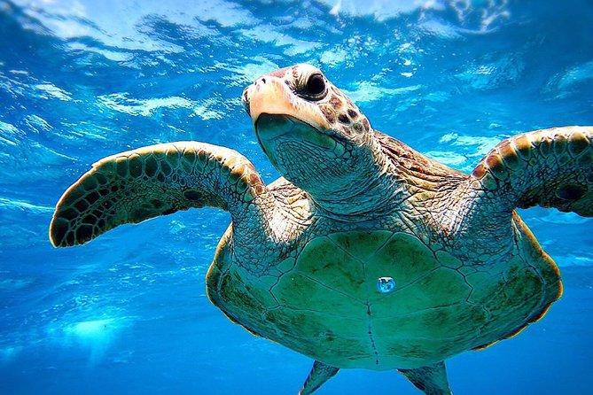 [Miyakojima Snorkel] Private tour from 2 people ♪ Go to meet cute sea turtle ☆
