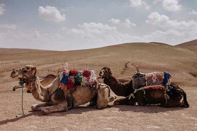 Ethical Camel Ride at Agafay Desert in Marrakech