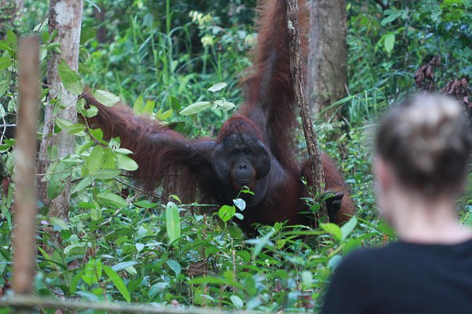 Orangutan Borneo Tanjung Puting Tour 2 nights