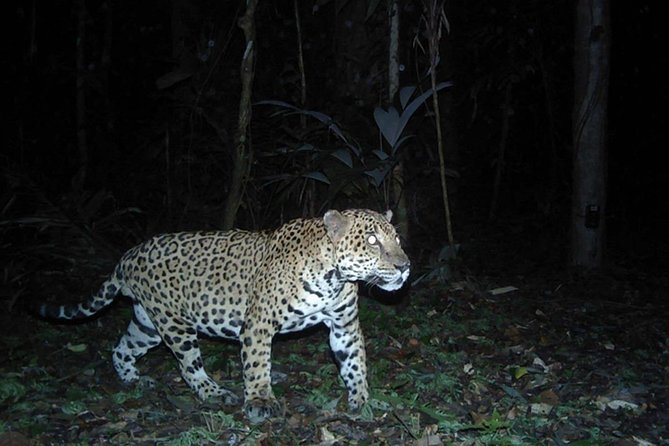 Jaguar Preserve Night Hike & Camping Experience (from Belize City)