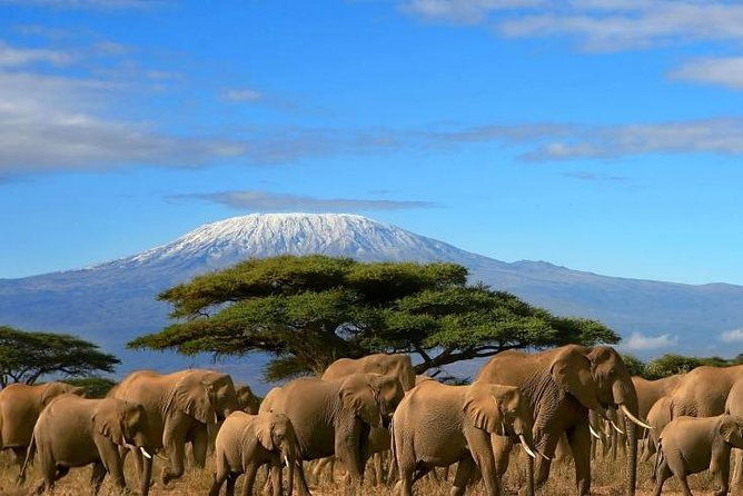3-Day Private Amboseli/Mt. Kilimanjaro Safari (LUXURY)