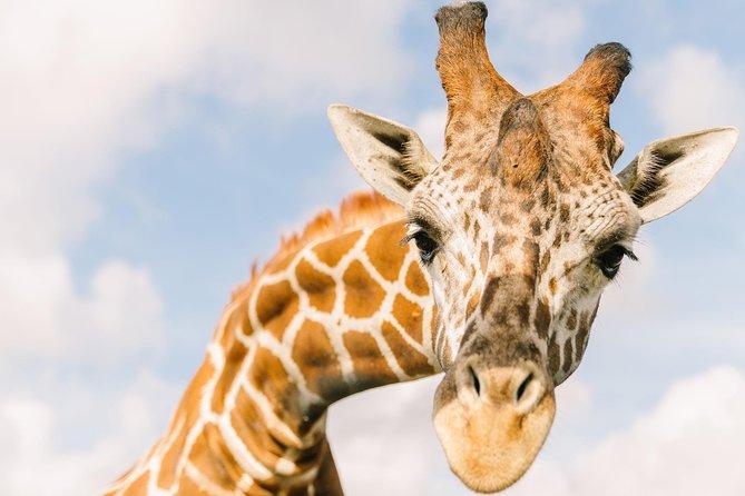 Wild Florida Drive-Thru Safari Park Admission