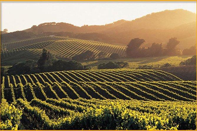 Sonoma & Healdsburg Wine Tours