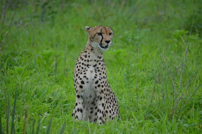 4 Days Safari Serengeti,Manyara, and Ngorongoro photo 4