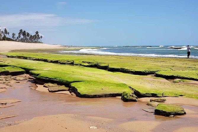 Ivan Bahia, passeio privado de dia inteiro na praia, nade com tartarugas, visite Praia Forte
