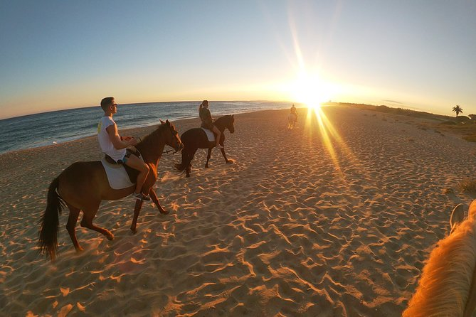 Bike tour with horse riding experience