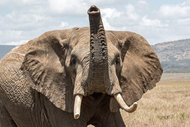 2 Days Safari to Amboseli National Park from Nairobi