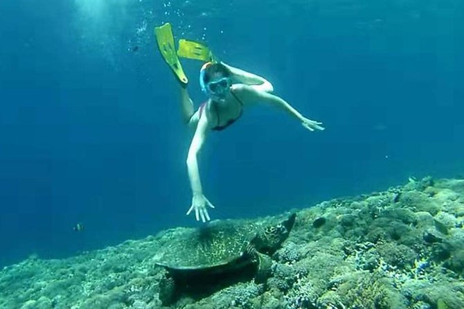 Gili Island Lombok One Day Snorkeling Tour
