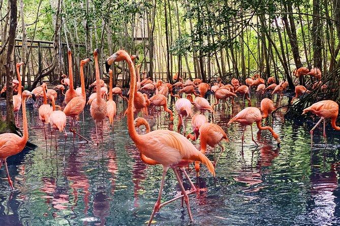 Excursão em grupo pequeno para o aviário de Cartagena e almoço na jóia escondida dos habitantes locais