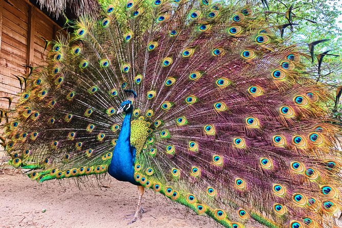 Small group tour to the Aviary from Cartagena