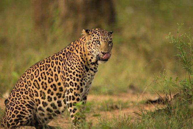 Safari In Jhalana Leopard Conservation Reserve, Jaipur