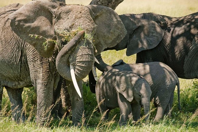 2 Days Tarangire & Lake Manyara Budget Camping Safari photo 1