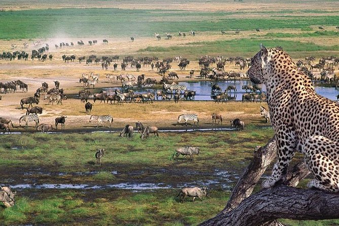 2 Days Tarangire & Lake Manyara Budget Camping Safari photo 2