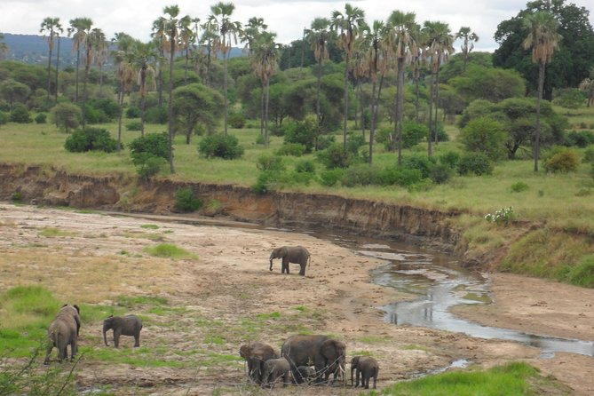 2 Days Tarangire & Lake Manyara Budget Camping Safari photo 4