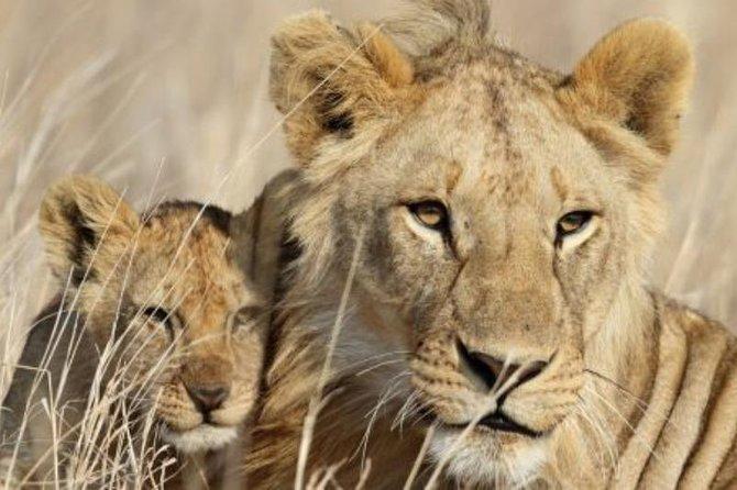 3-Day Masai Mara Private Luxury Safari