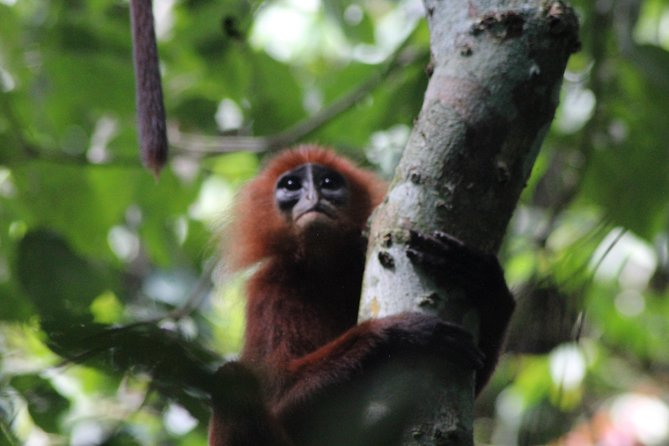 Borneo Wildlife Tour 4 Days 3 Nights At Tanjung Bulat Jungle Camp