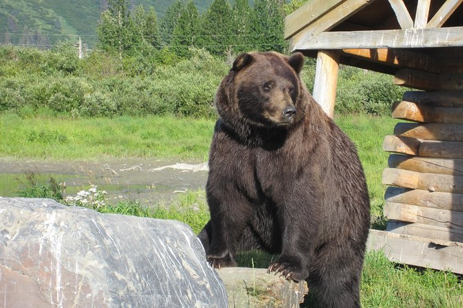 Alaska Wildlife Conservation Center Express