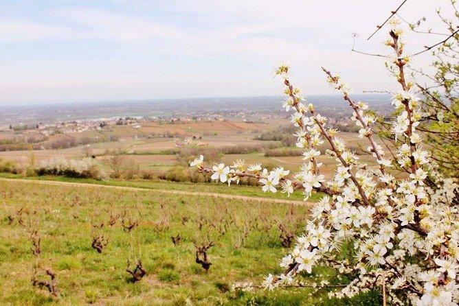 Lyon vineyards private tour