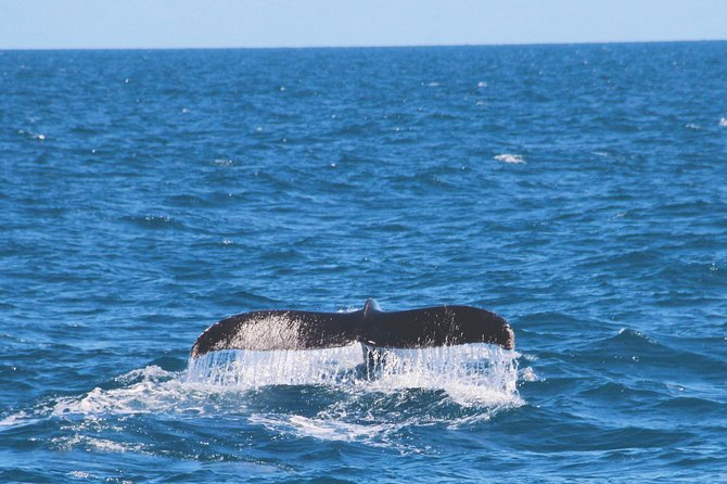 Whale Watching Cruise in Trincomalee (Private 7-Hour Tour) photo 4