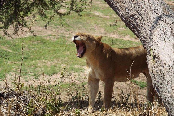 3 Days 2 Nights Mikumi National Park from Dar es salaam
