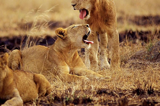 6 Days Kibale & Queen Elizabeth National Parks Exciting Mid-range Package