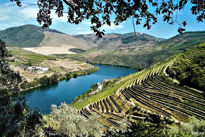 Douro Valley Small Group Tour: Visit Three Wineries with Wine Tastings and Lunch photo 1