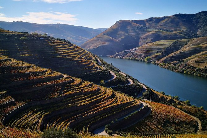 Douro Valley Small Group Tour: Visit Three Wineries with Wine Tastings and Lunch photo 8