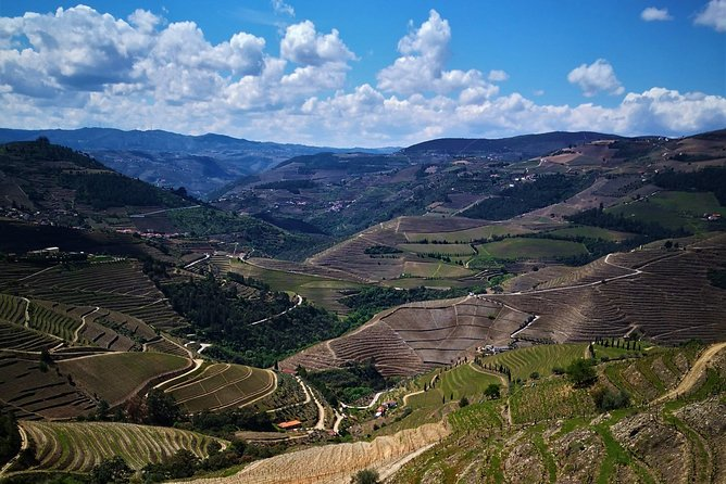 Douro Valley Small Group Tour: Visit Three Wineries with Wine Tastings and Lunch photo 4