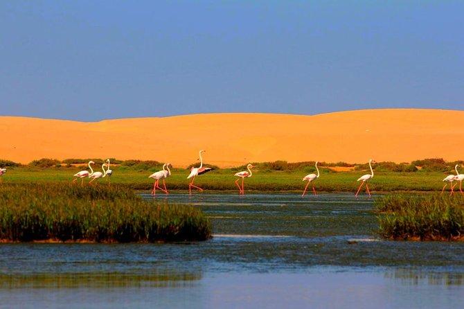 Sahara Dirt road and wild camping