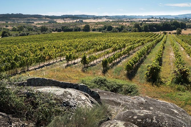 Full-Day Dão Wineries Private Tour with Wine & Cheese Tasting