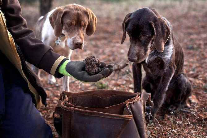Truffle Hunting in Padna, Slovenia: Lunch & Wine included