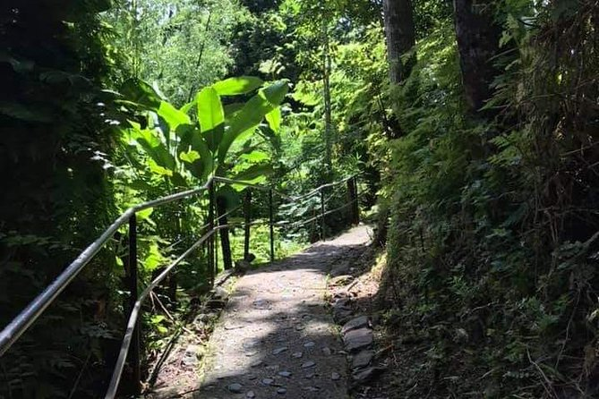 Let me show you MY island! (with visit to El Yunque)