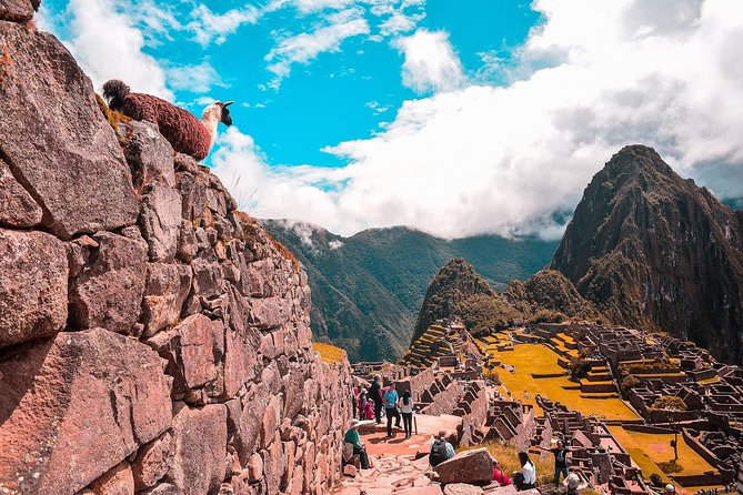 The Jungle Journey to Machu Picchu