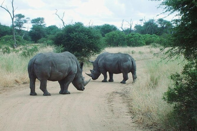 Rhino & lion nature reserve tour from Johannesburg