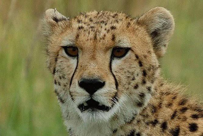 Ann de-wildt cheetah tour