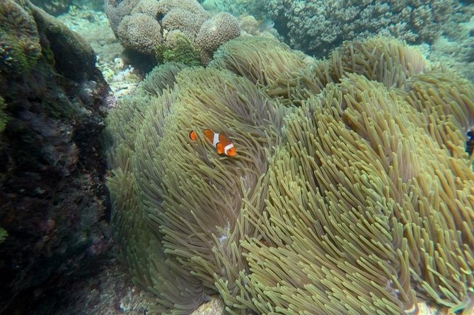 From Bali : Private Guided Penida Beach & Triple Snorkeling Tour