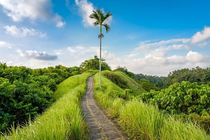 Ubud Instagram Spots Tour - One Day Private Trip photo 8