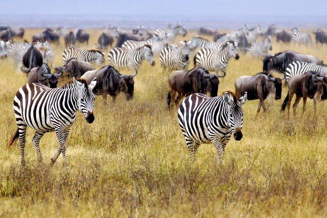 2 Days Masai Mara Joining Safari