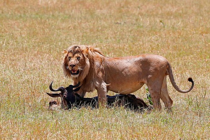 Nairobi National Park Game Drive Joining Safari