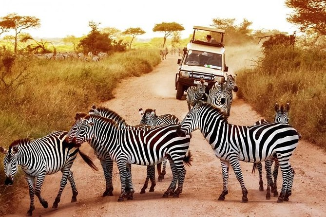 2 Days Tanzania Wildlife Safaris
