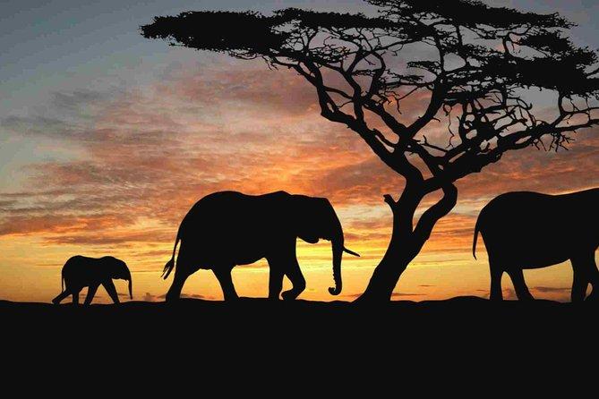 4 Days Camping Safari – Tarangire, Ngorongoro, Manyara, Olduvai Gorge