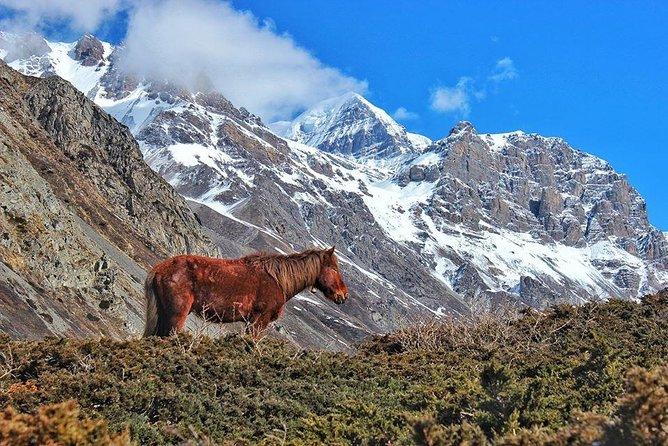 Annapurna Circuit Trek with Heritage Highlights