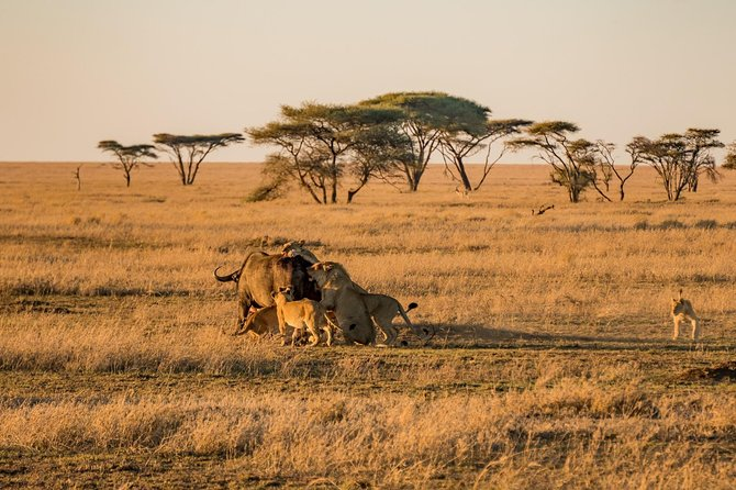 9 Days Family Safari - Tanzania Northern Circuit
